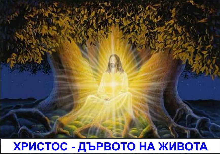 ХРИСТОС - ДЪРВОТО НА ЖИВОТА